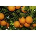 Eterinis apelsinų (saldžiųjų) aliejus, 10 ml