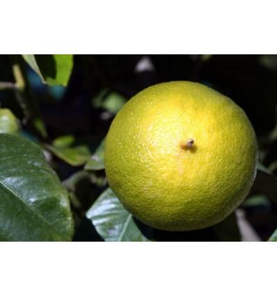 Eterinis bergamočių aliejus, 5 ml
