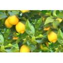 Eterinis citrinų aliejus, 5 ml