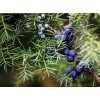Eterinis laukinių kadagių uogų aliejus, 5 ml
